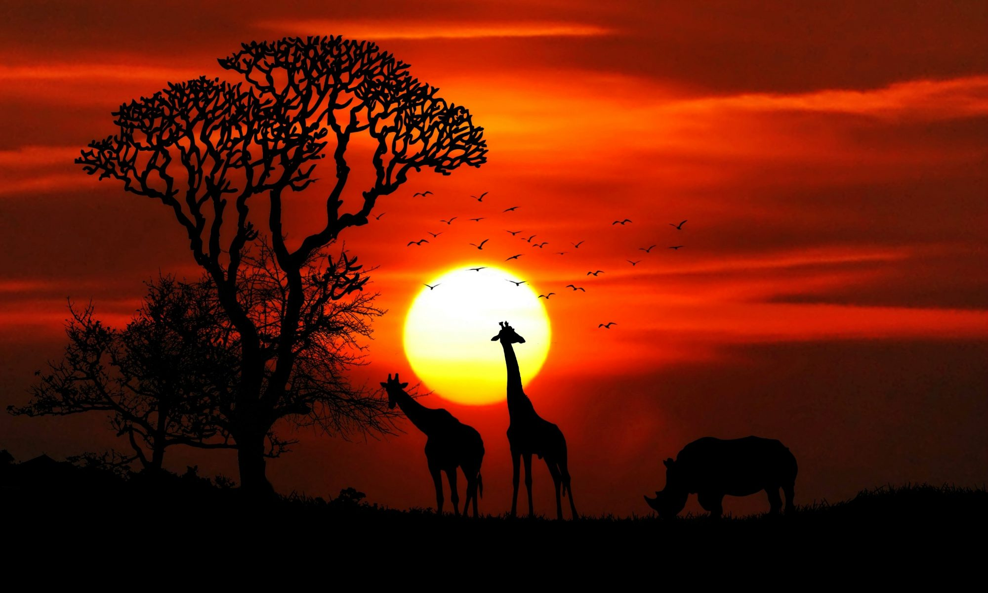 Canva - Silhouette Photography of Two Giraffe and Rhinoceros during Golden Hour